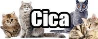 catpic_cat