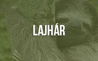 Lajhár